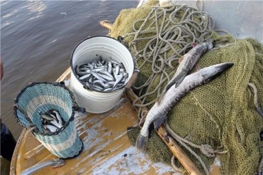где и чем ловить рыбу краснодарский край